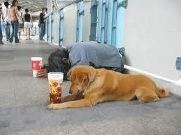 homelessdog